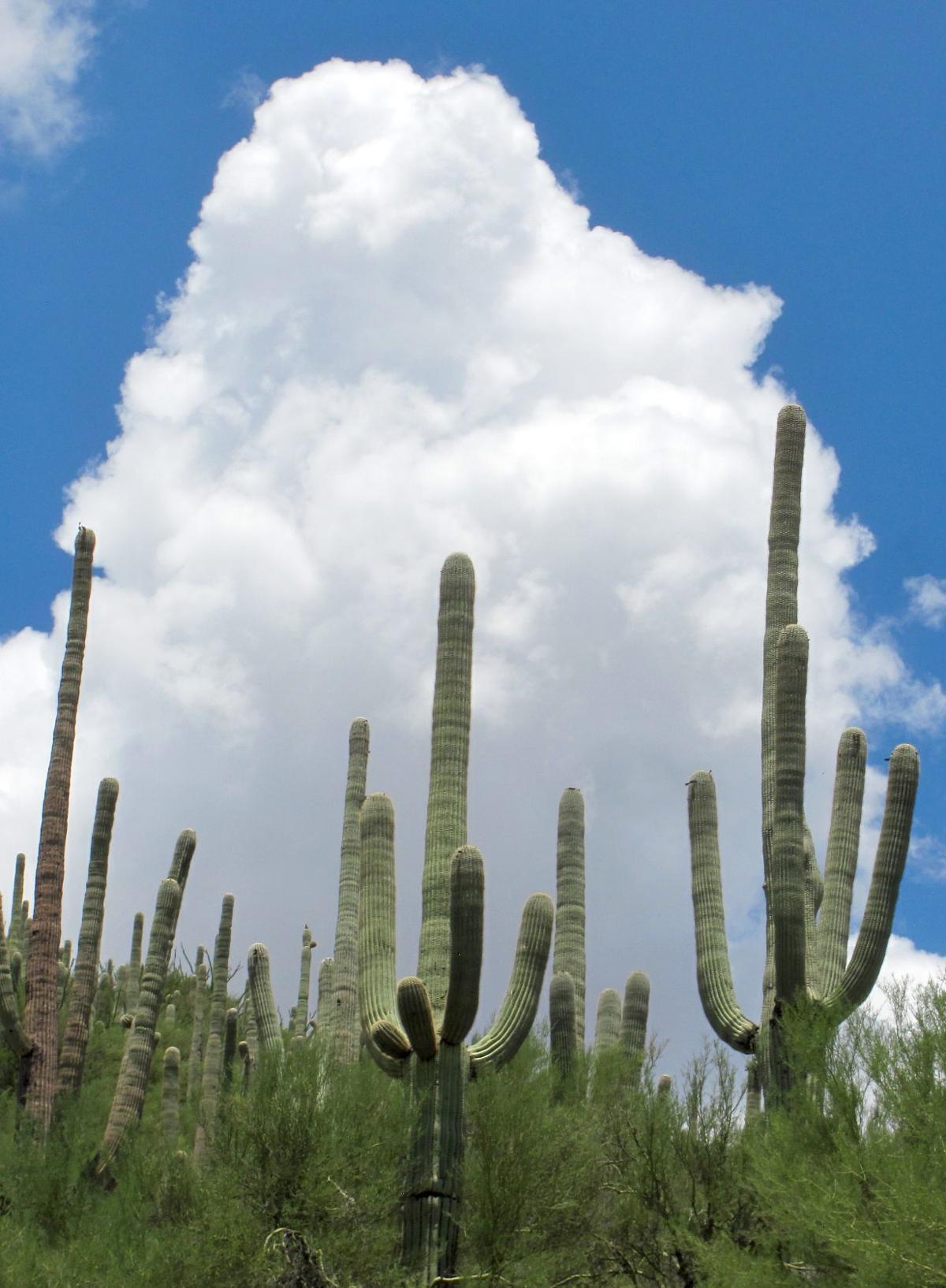 Towering cloud