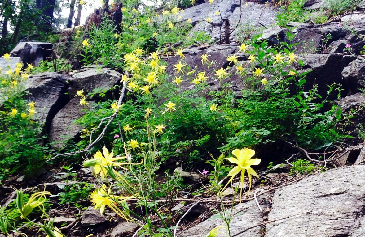 Yellow blooms and gray granite