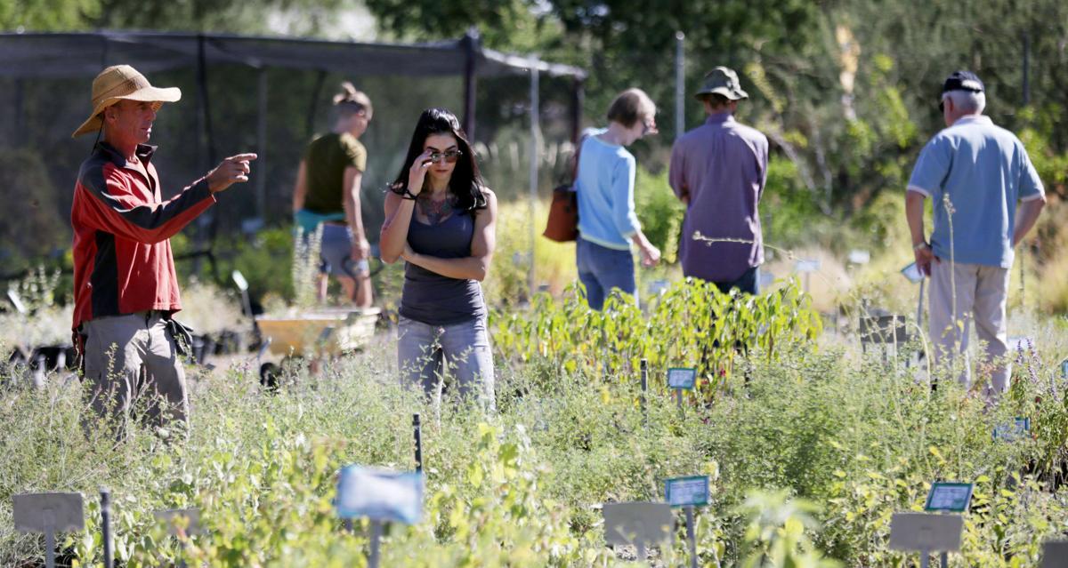 Plant selection: Desert Survivors