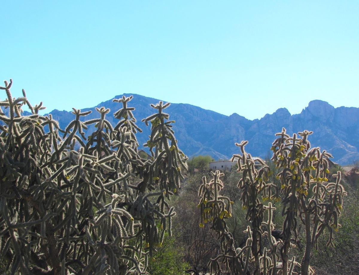 Catalina Mountain views