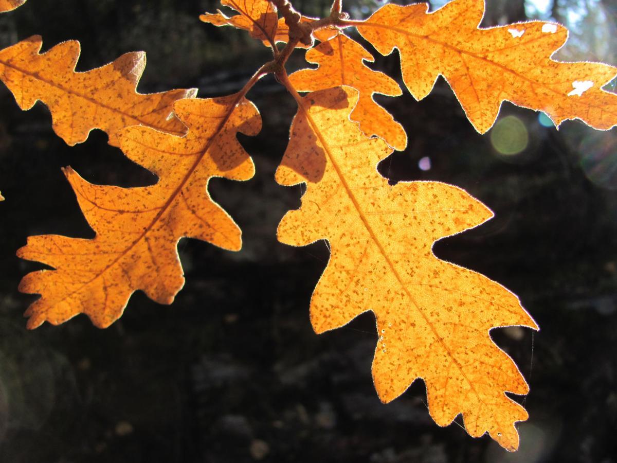 Autumn in Tucson
