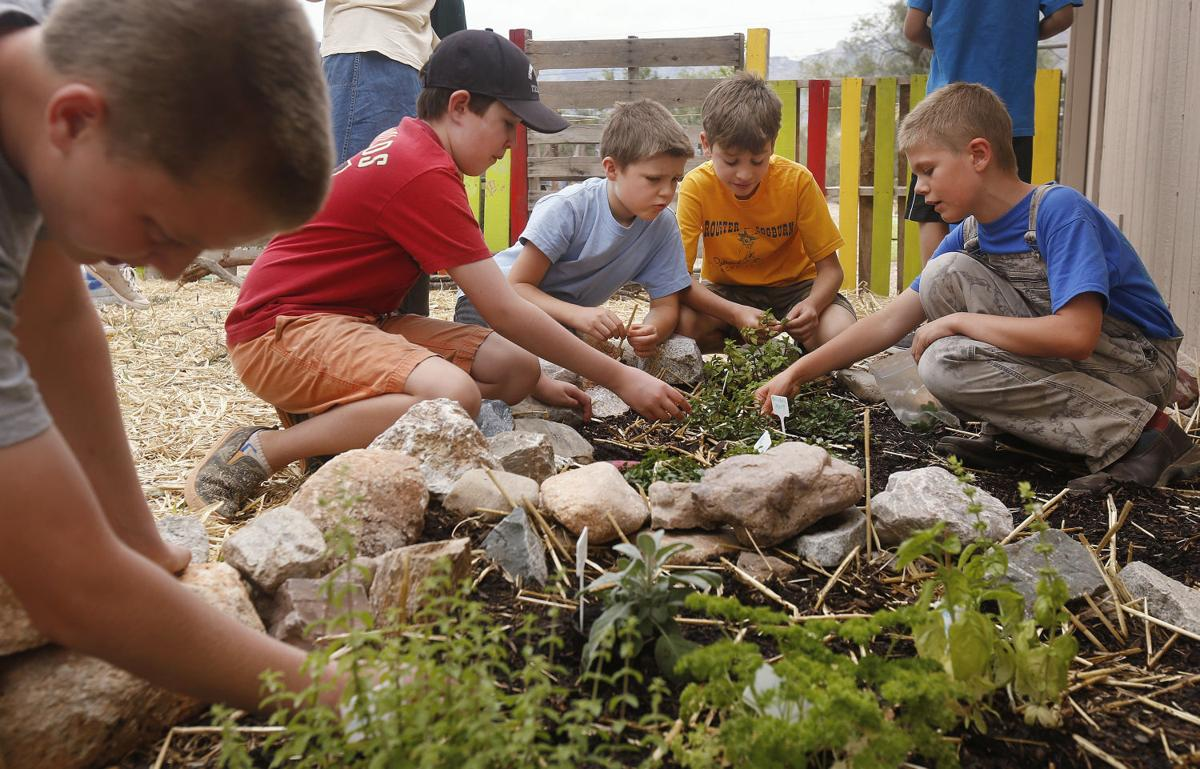Youth program cultivates a love of gardening | Tucson Gardens ...