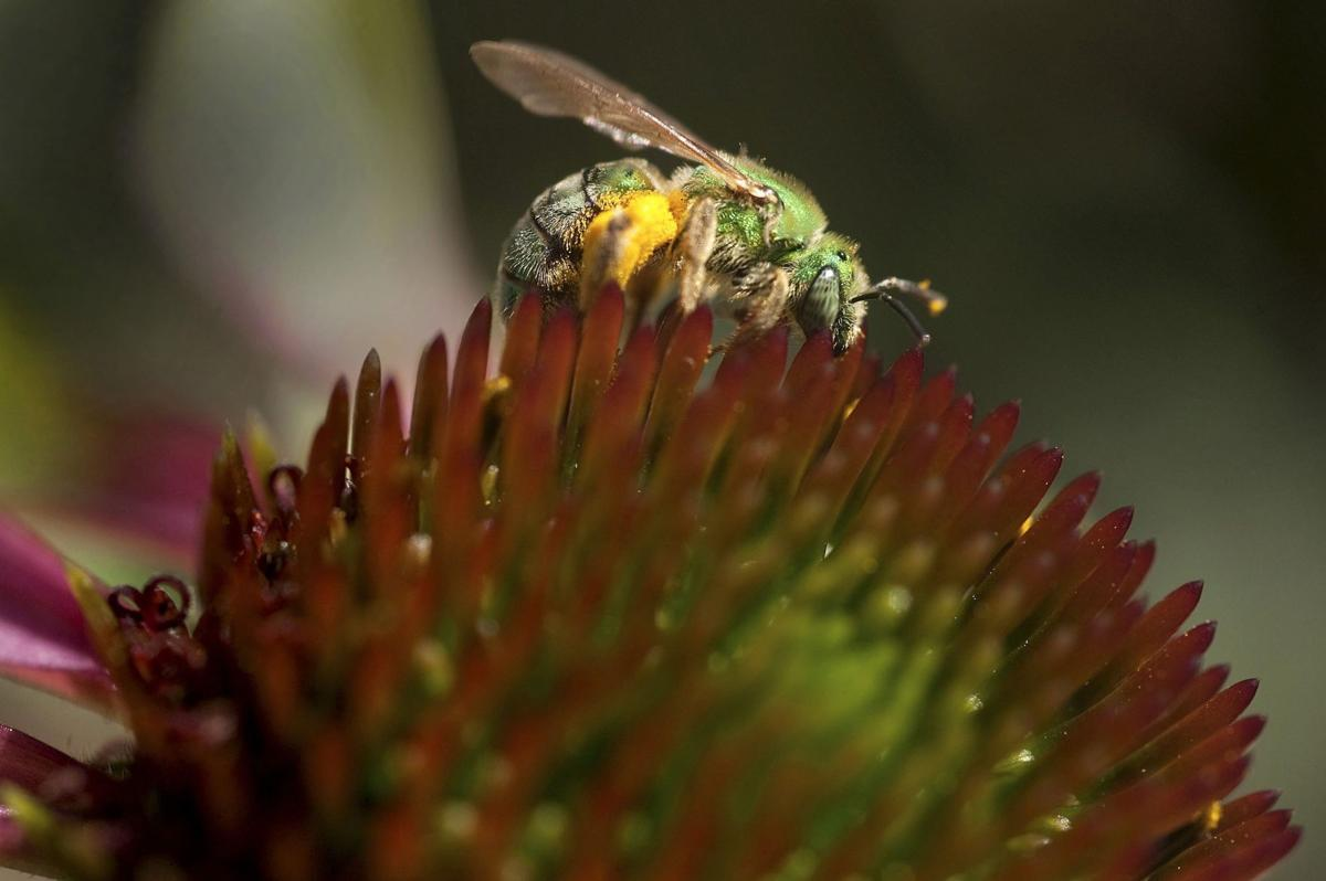 At least 7 people stung in bee attacks in Chandler and Mesa