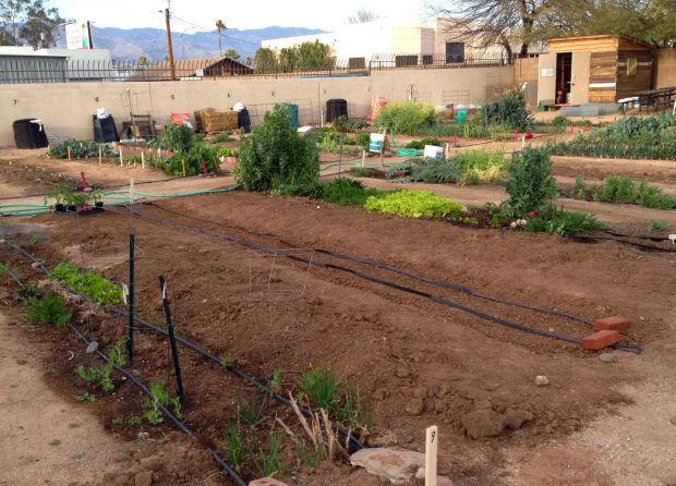 Community garden plots