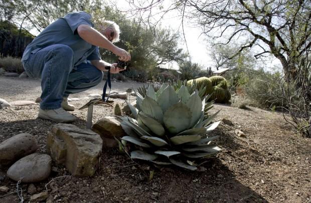 Pointy plants add variety to landscape