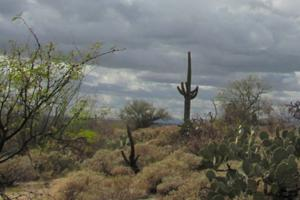 Tucson weather: Cooler temperatures to kick off the week