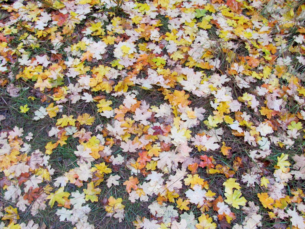 Leaves carpet forest floor