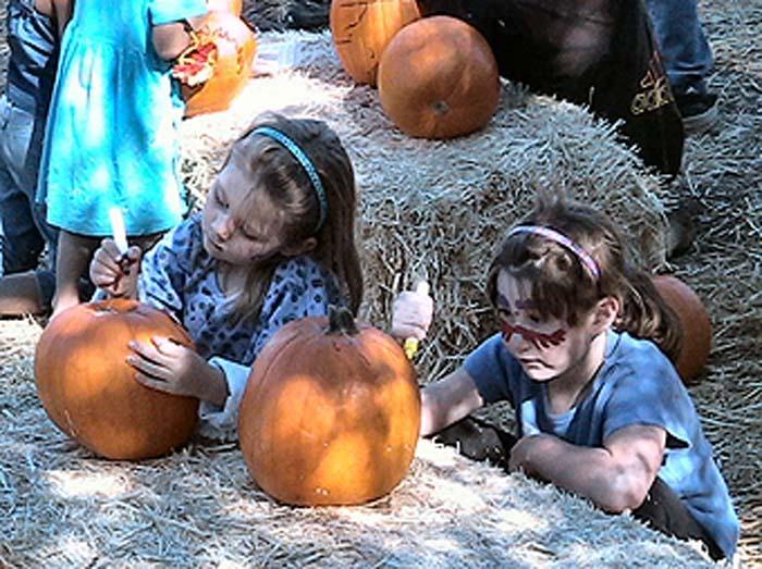 Gourd festival volunteers needed