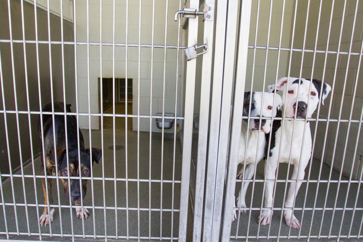 Pima Animal Care Center