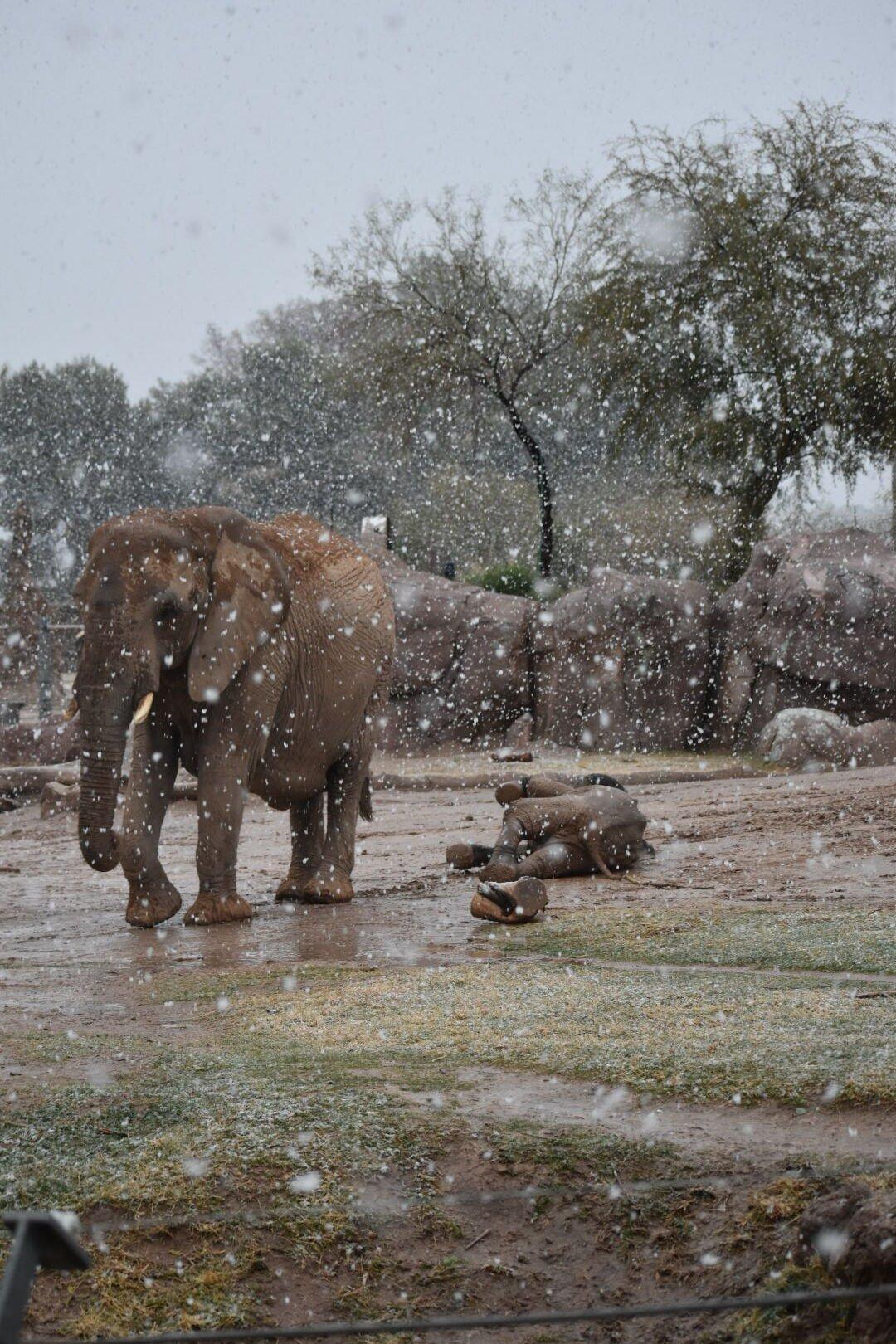 Reid Park Zoo elephants enjoy snow day