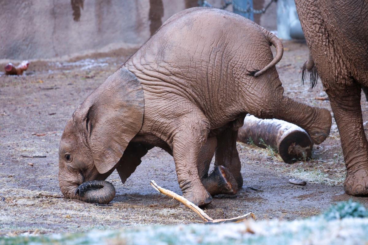 Penzi elephant head stand (1).jpg