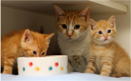 Kittens and their mom dropped at Humane Society