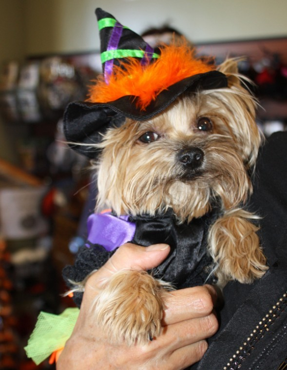 Howl-o-ween puppy