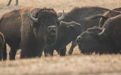 bison-group-main-photo-800.jpg