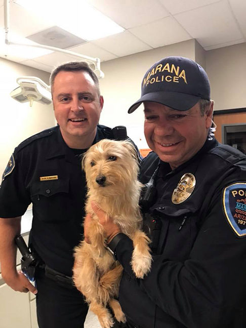 Dog with Police