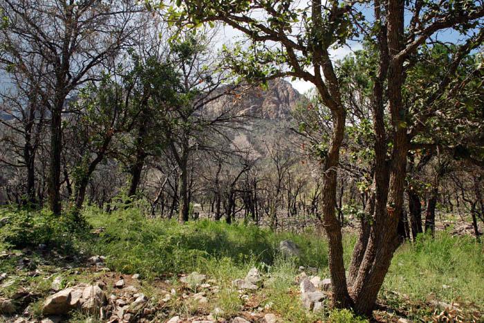 Brown Canyon 1