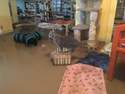 Flooded cats