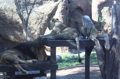 Reid Park Zoo Summer Safari