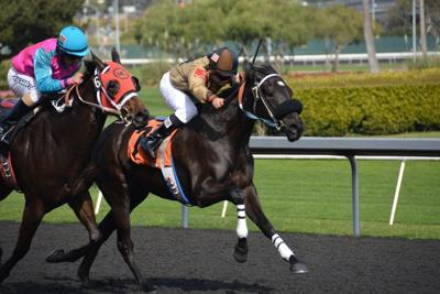 horseracing-5061006_1280.jpg