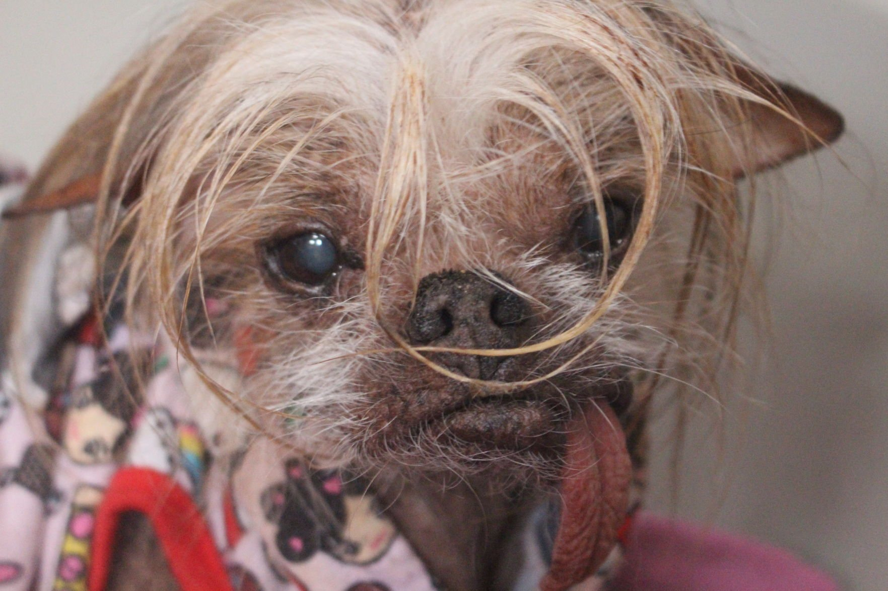 Tucson, you have some ugly pets! | Tucson Local Media
