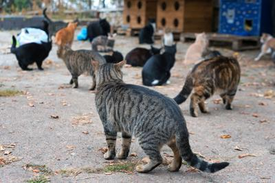 Stray Cats On The Street. A Group Of Homeless And Hungry Street Cats Waiting For Food From Volunteer