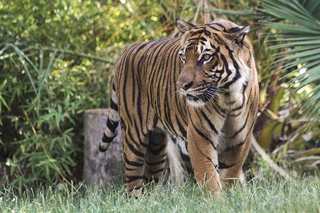 Photo Gallery: Animal Art at Reid Park Zoo