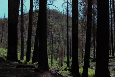 summerhaven_johnson_9 bighorn fire.jpg