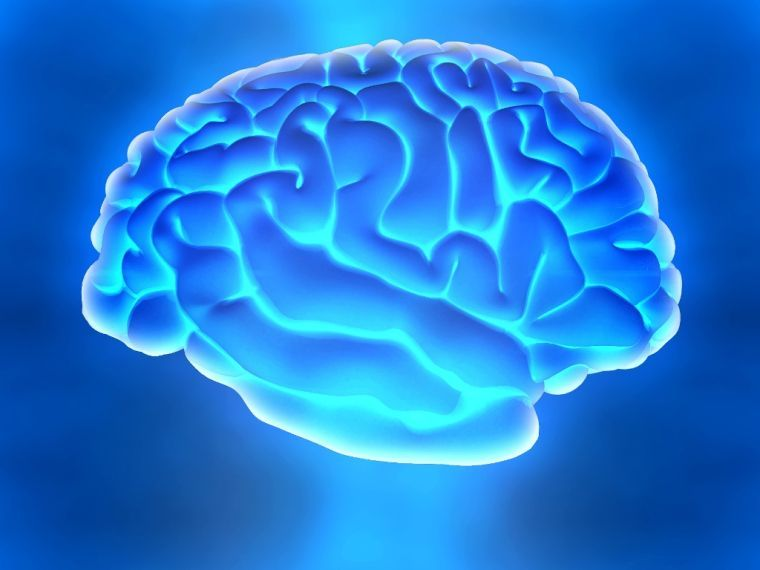 """The Evolving Brain"""