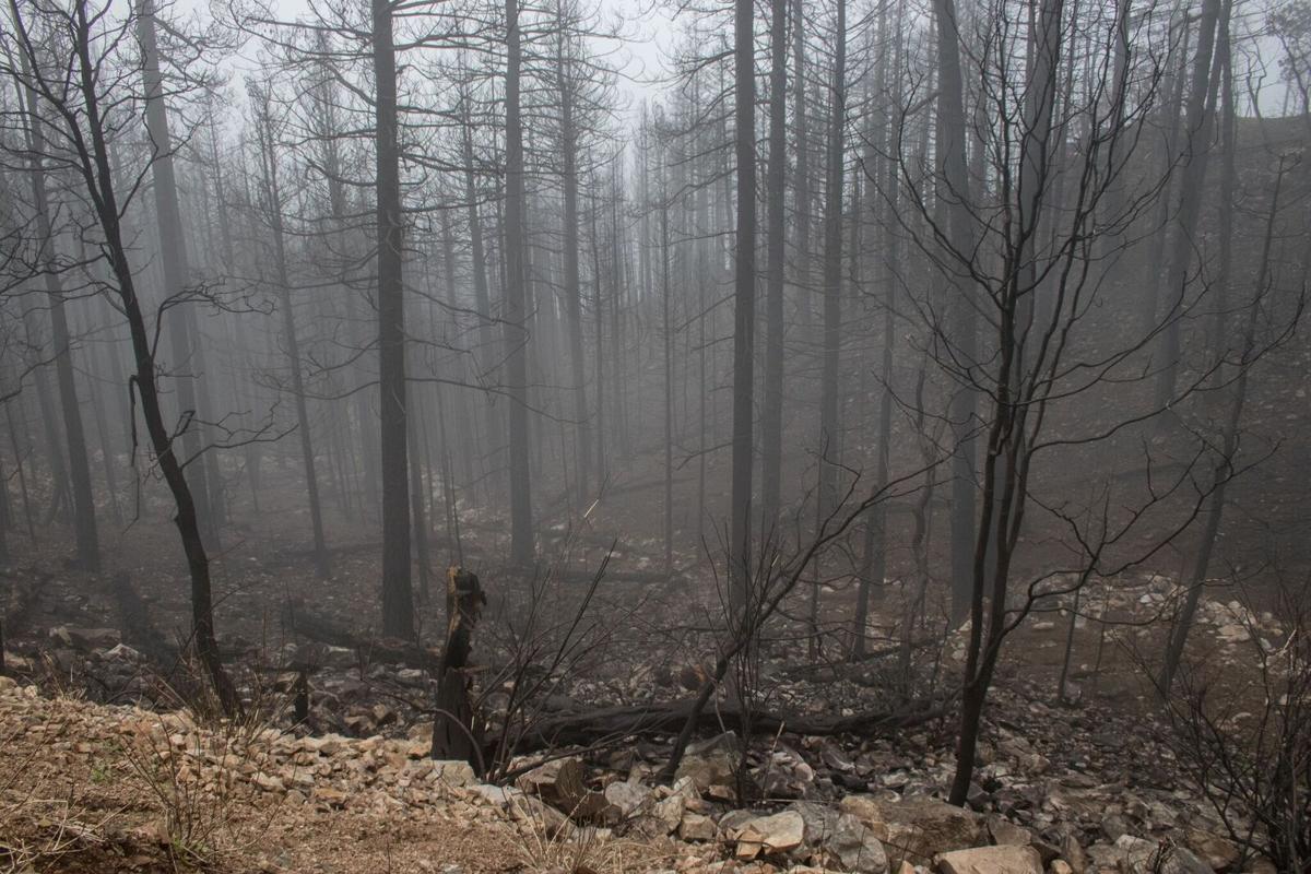 Frye Fire aftermath