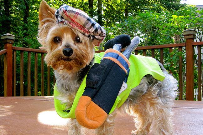 Ace the Golfing Dog
