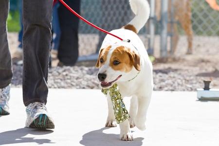 Pima Animal Care Center dog