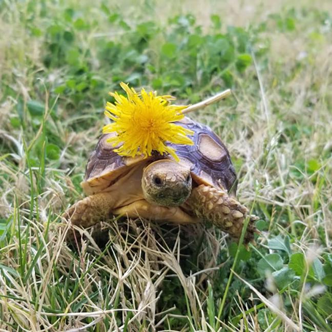 Alex's tortoise