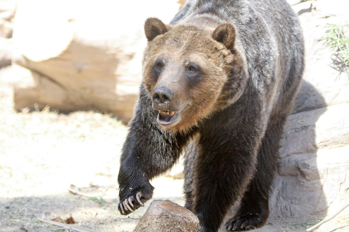 Ronan the bear
