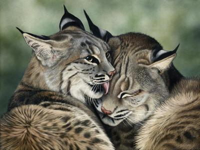 SheeterCathy-bliss_in_a_kiss-72720201214-5711.jpg