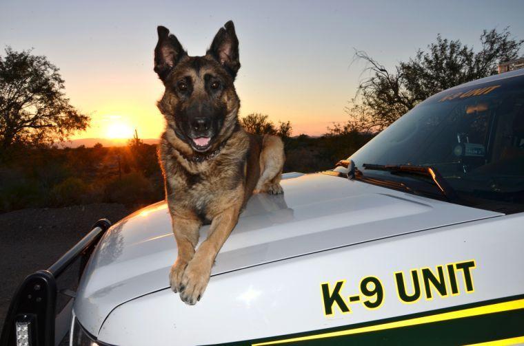 Pima County Sheriff Deputy's canine dies | News | tucsonlocalmedia com