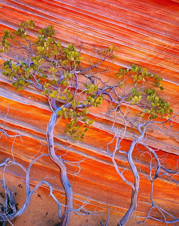 Vermilion Cliffs National Monument, AZ., 2009.jpg