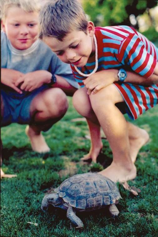 Finding homes for tortoises