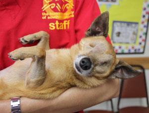 Humane Society blind dog