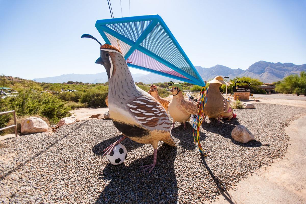 Naranja Park quails