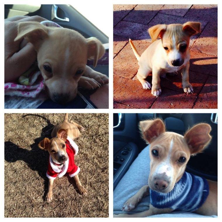 Puppy poisoned to death, OVPD seeks public's help
