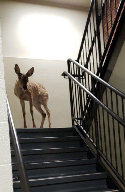 Deer in Maac 2