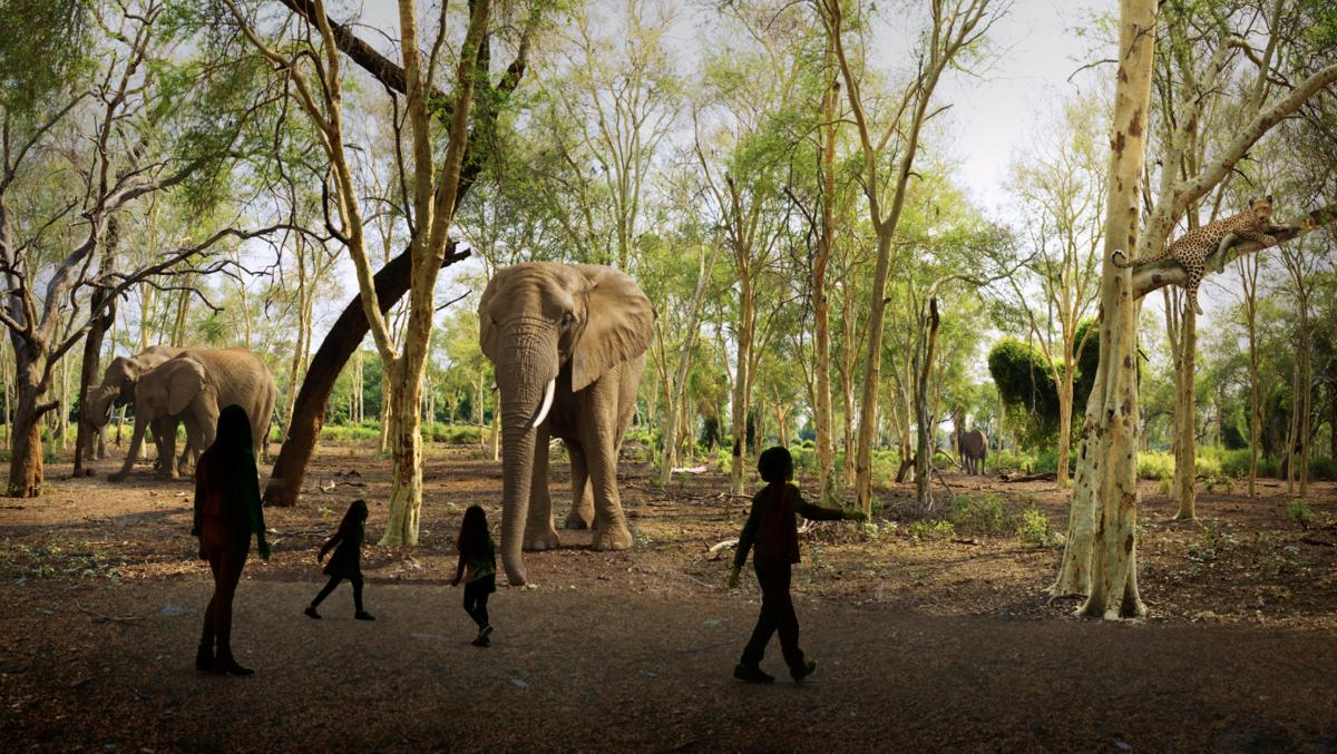 Illuminarium - WILD Safari Elephants