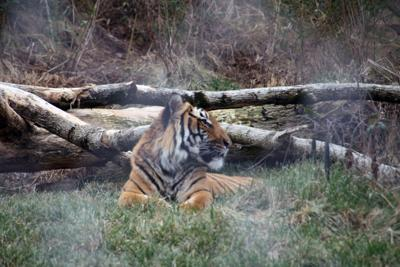 Knoxville Zoo03
