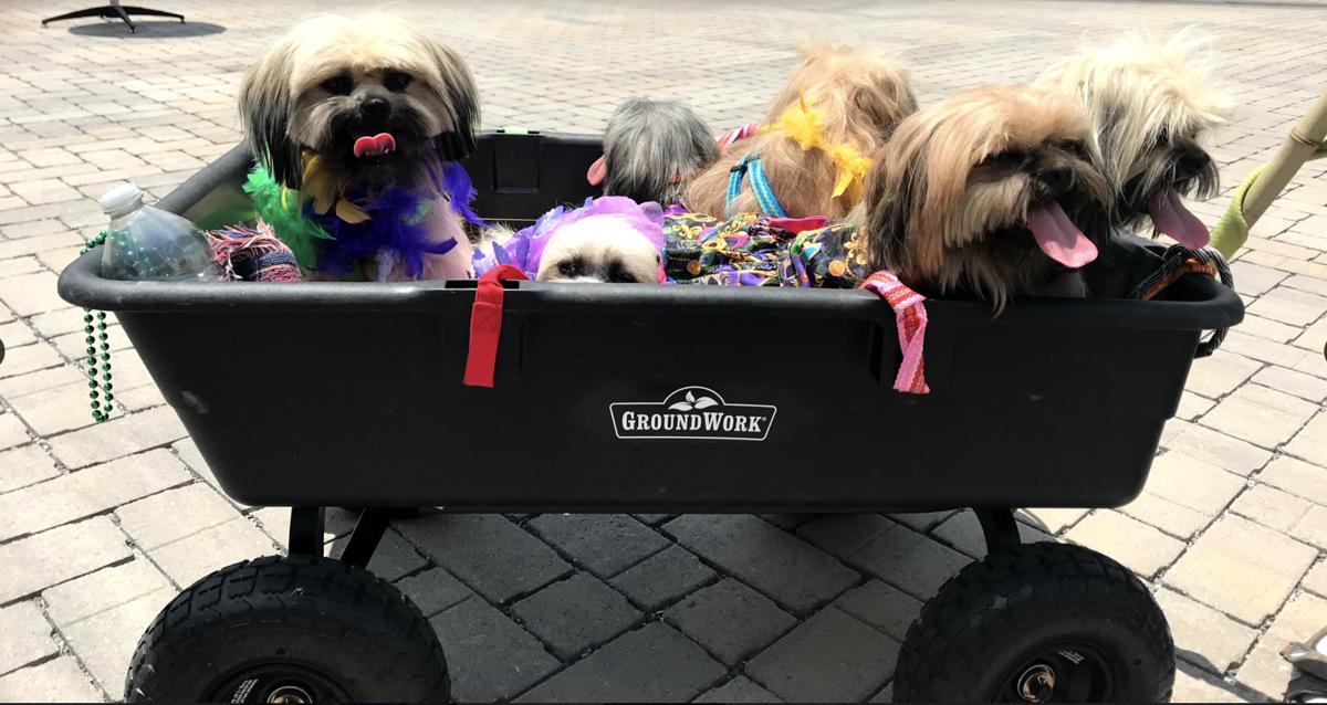 Mardi Growl 2021 Dogs in Wagon