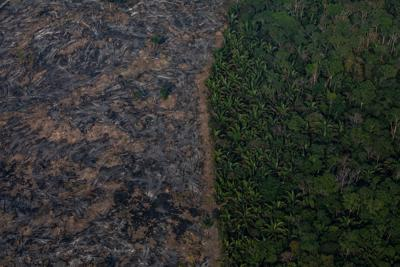 Amazon Rainforest destroyed by wildfires