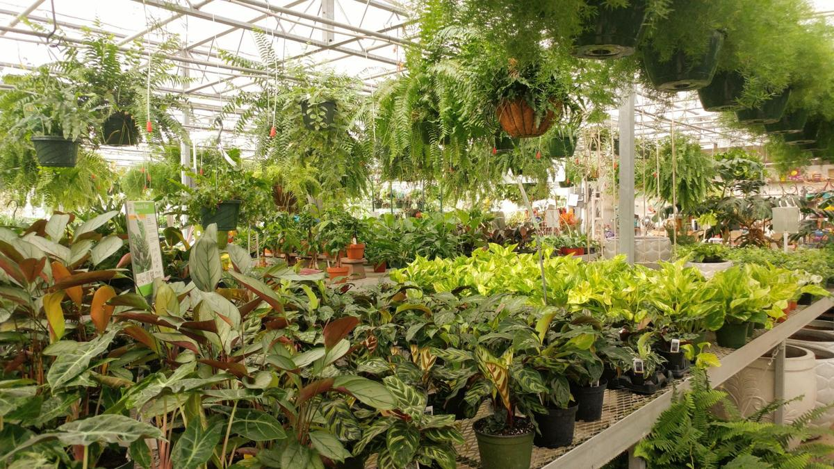 Stanley's Greenhouse