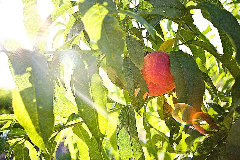 Berry Peachy | Business | valdostadailytimes com
