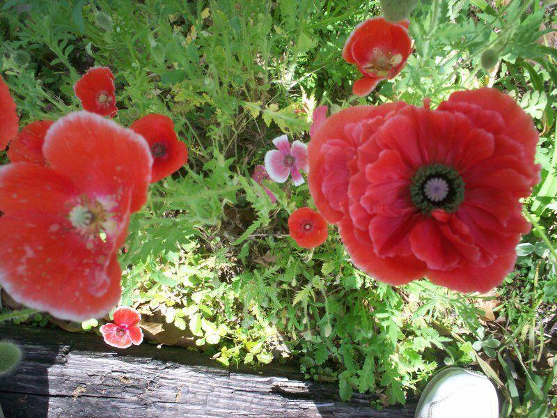 GROOMS GARDENING: Prepare now for spring gardening