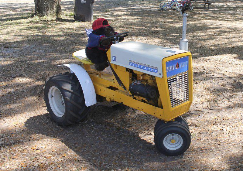 Echols celebrates antique tractors, cars | Local News