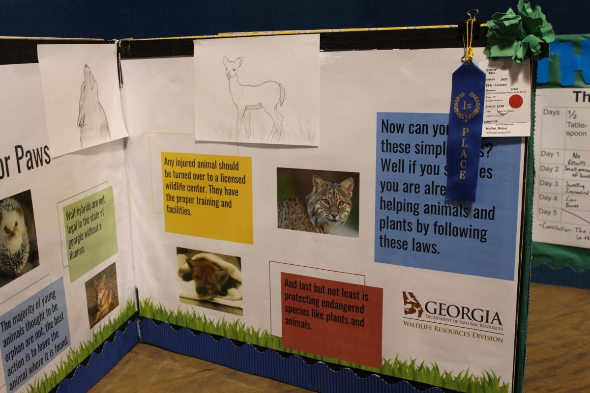 "One of the prize-winning exhibits from the fair. This one was a FFA/Forestry exhibit called ""Laws for Paws,"" people about wildlife laws in Georgia. It was created by Midori Moffett from Northeast Middle School FFA."